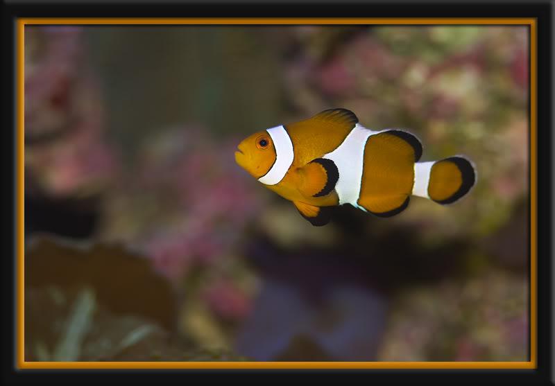 Nemo2.jpg