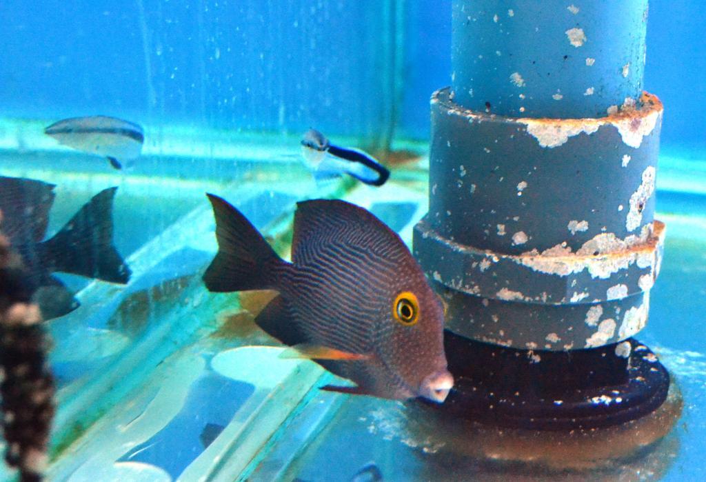 New fish 028.jpg
