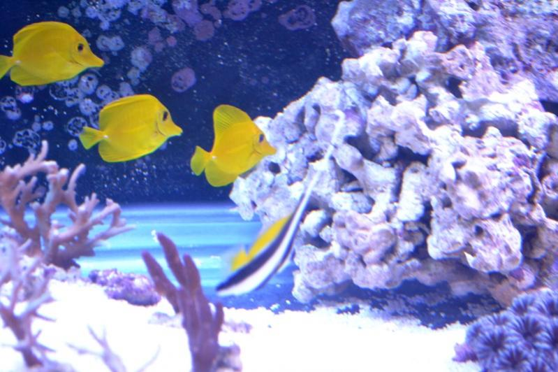 New fish 044.jpg