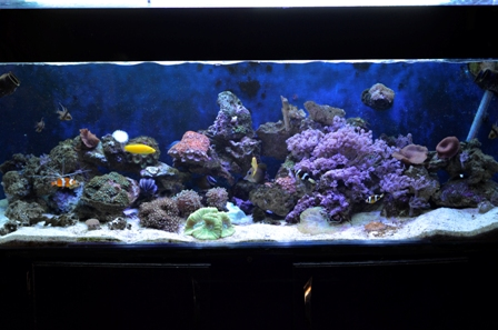 New full tank shot.jpg