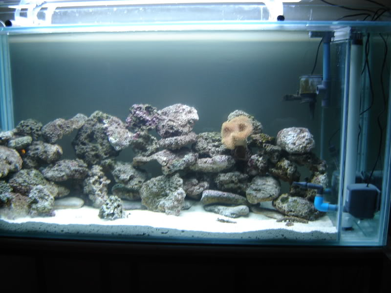 newmarinefishtank066.jpg