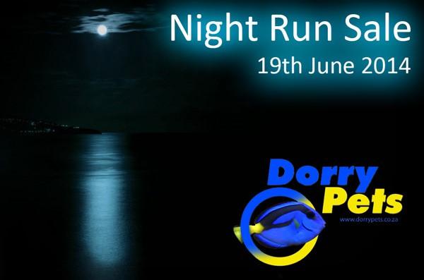 Night Run.jpg
