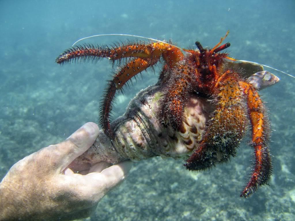 nwhi-crab.jpg
