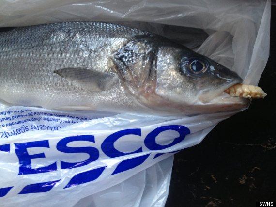 o-PARASITE-FISH-570.jpg