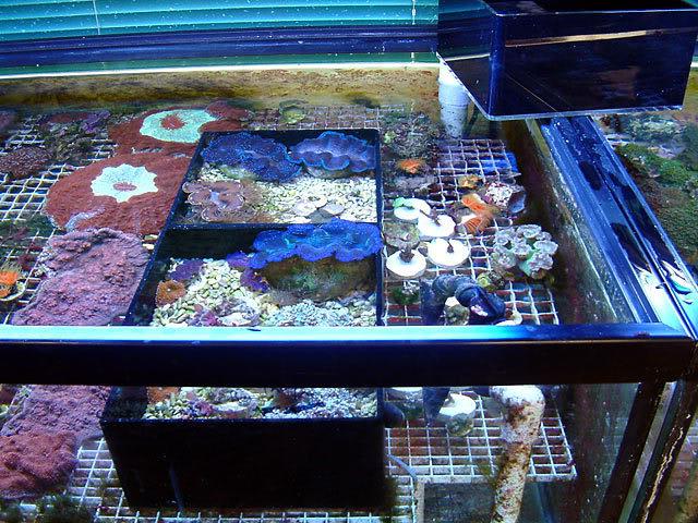 oc_clams.jpg