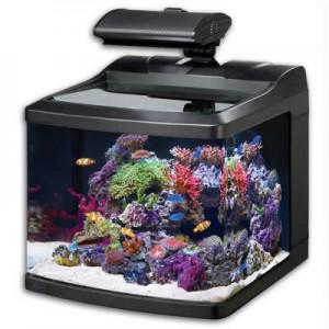 oceanic_biocube_hqi_aquarium_29-300x300.jpg