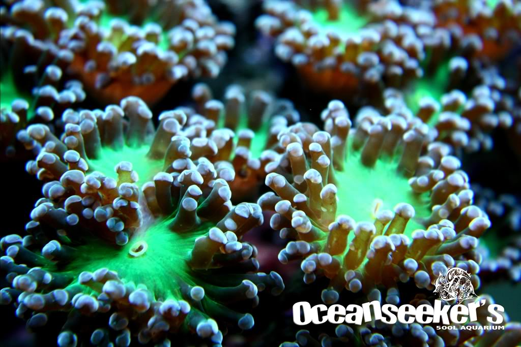 OceanseekerAquarium-106.jpg