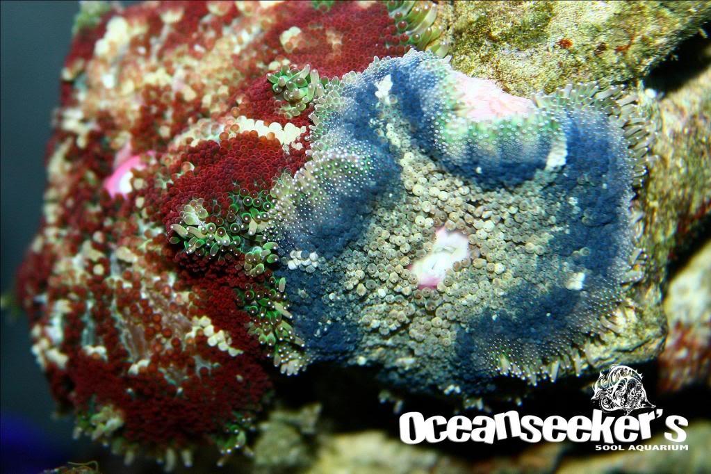 OceanseekerAquarium-139.jpg