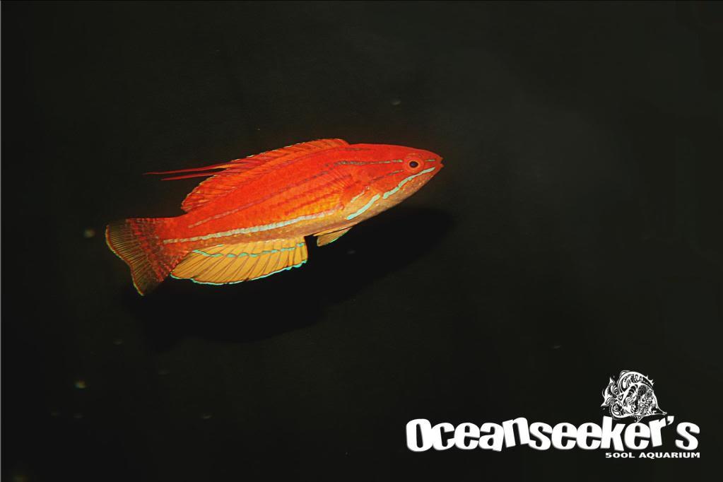 OceanseekerAquarium-149.jpg