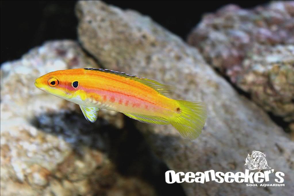 OceanseekerAquarium-150.jpg