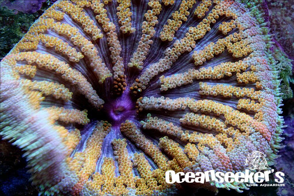 OceanseekerAquarium-155.jpg