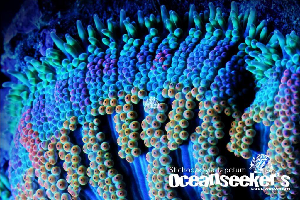 OceanseekerAquarium-156.jpg