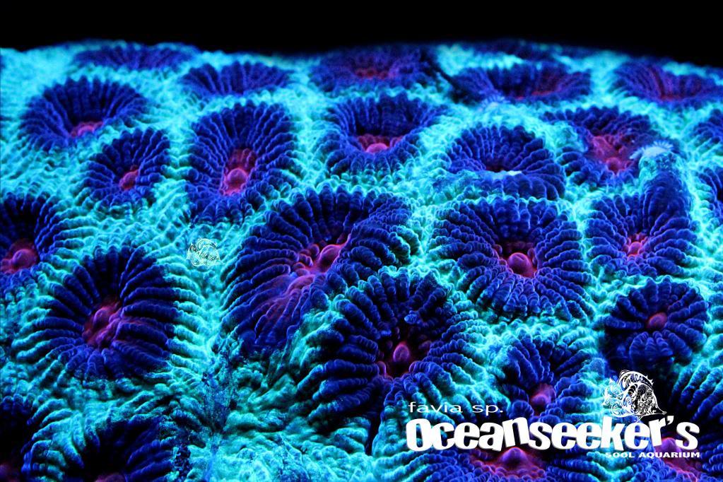 OceanseekerAquarium-164.jpg