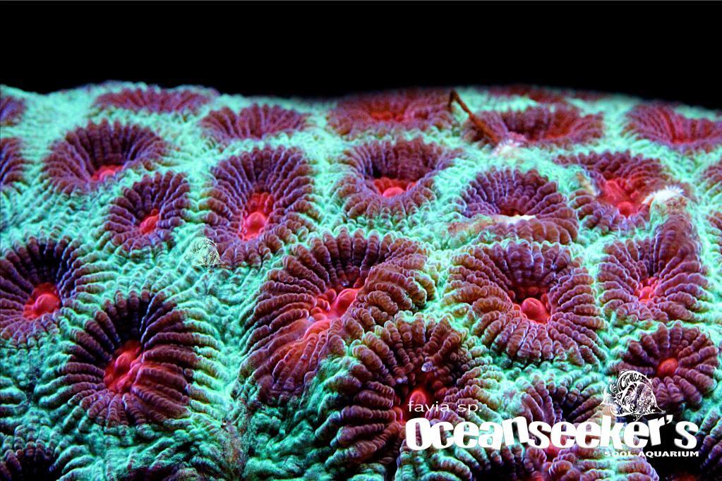 OceanseekerAquarium-165-1.jpg