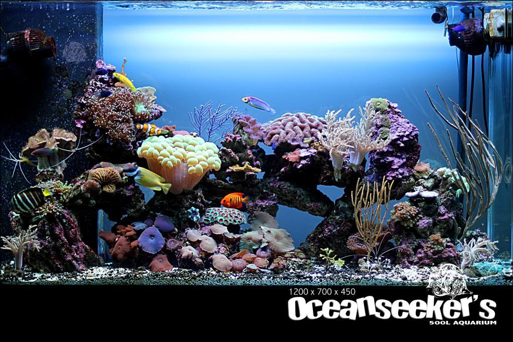 OceanseekerAquarium-166.jpg