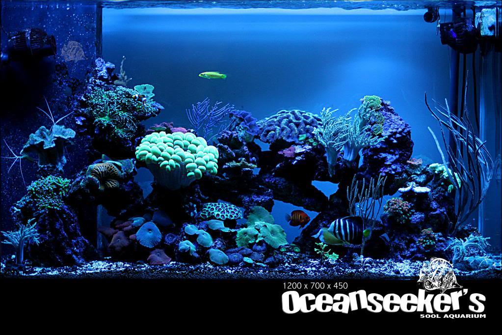OceanseekerAquarium-167.jpg