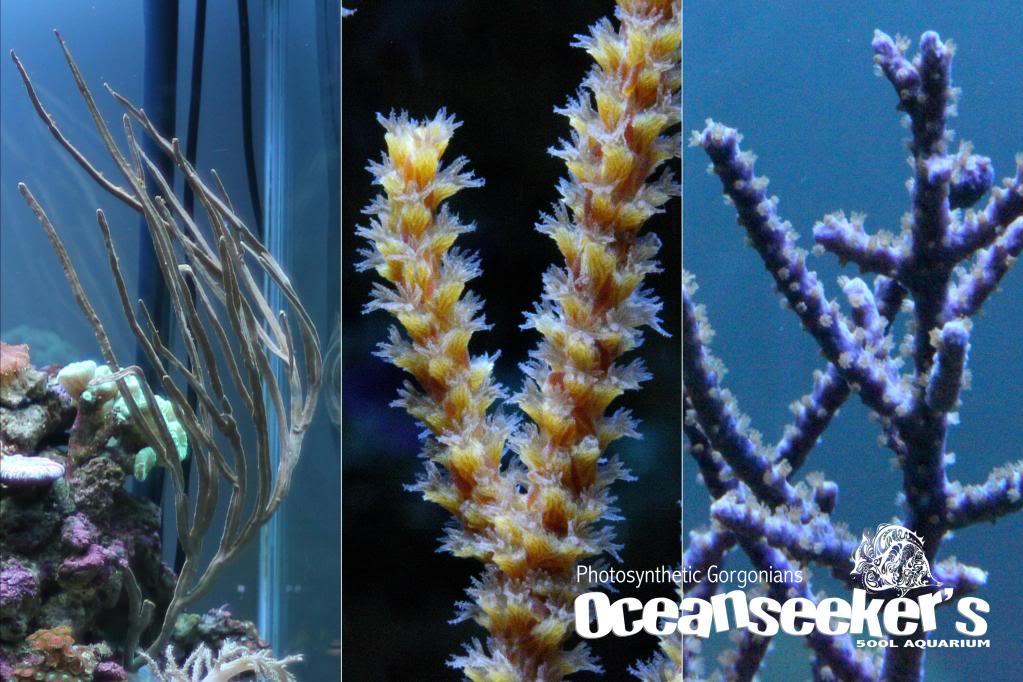 OceanseekerAquarium-168.jpg