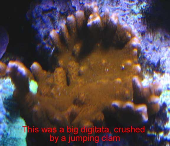 Oct2010Digitata2.jpg