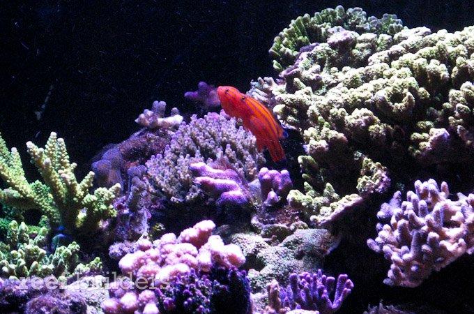 orphek-nilus-reef-3.jpg
