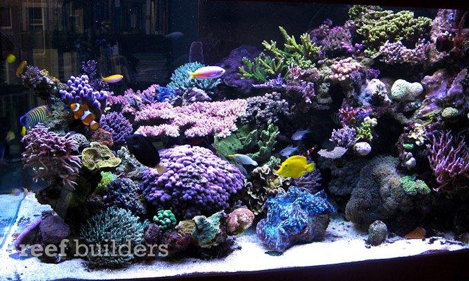orphek-nilus-reef-4.jpg