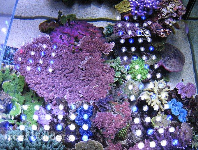 orphek-nilus-reef-5.jpg