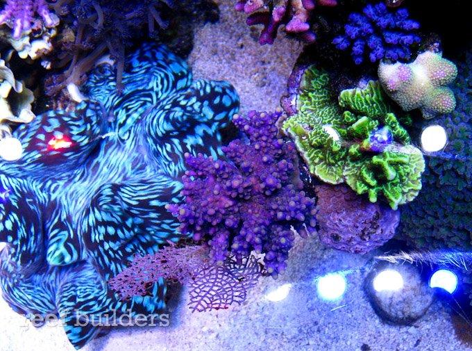 orphek-nilus-reef-6.jpg