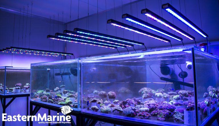 Orphek-OR-120-Bar-LED-Aquarium-Lighting-768x444.jpg
