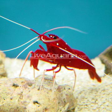 p-26152-shrimp.jpg