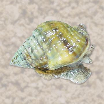 p-80509-snail.jpg