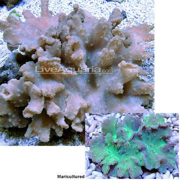 p-84627-cabbage-2.jpg