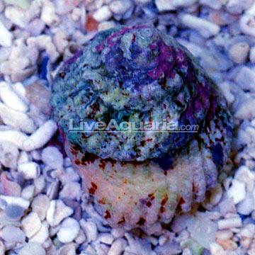 p-86499-snail.jpg