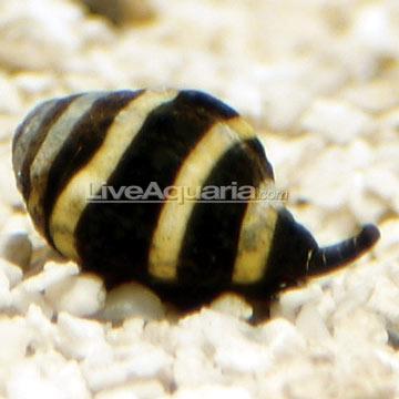 p-86512-snail.jpg