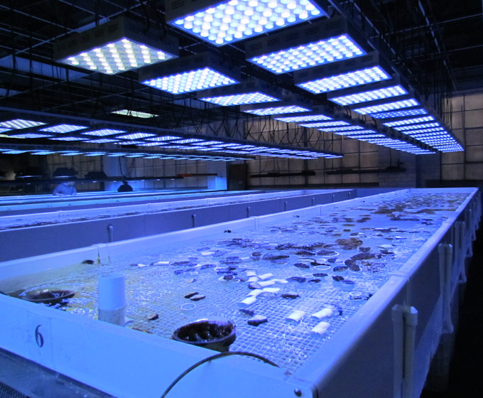 pacific-aqua-farms-led-1.jpg
