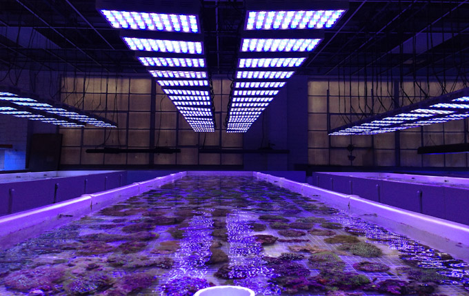 pacific-aqua-farms-led-2.jpg