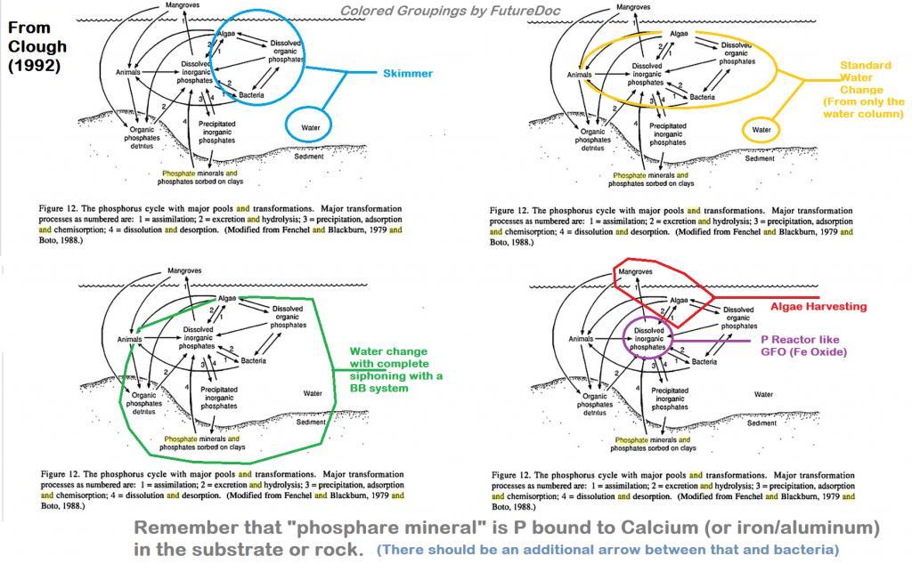 phosphate_graphic_4_square_original.jpg