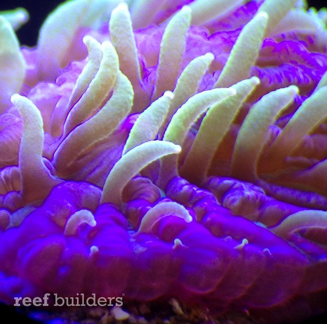 projectx-fungia-reefgen-1.jpg