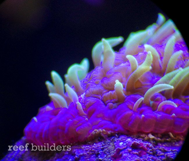projectx-fungia-reefgen-2.jpg