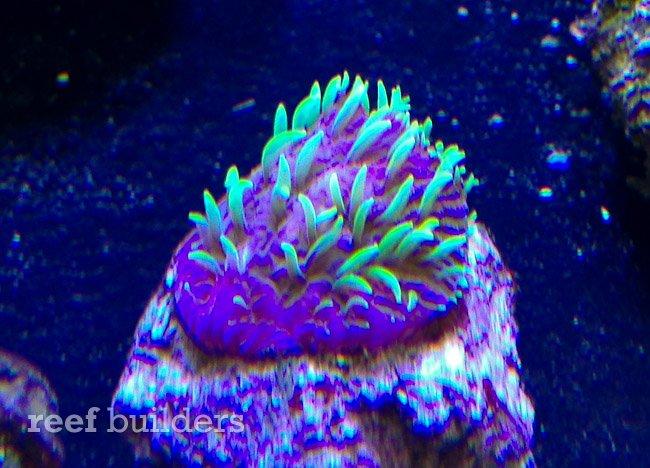 projectx-fungia-reefgen-5.jpg