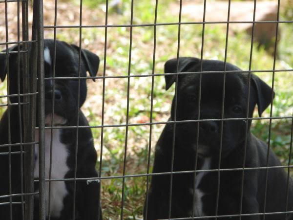 PuppiesBehindbars020.jpg