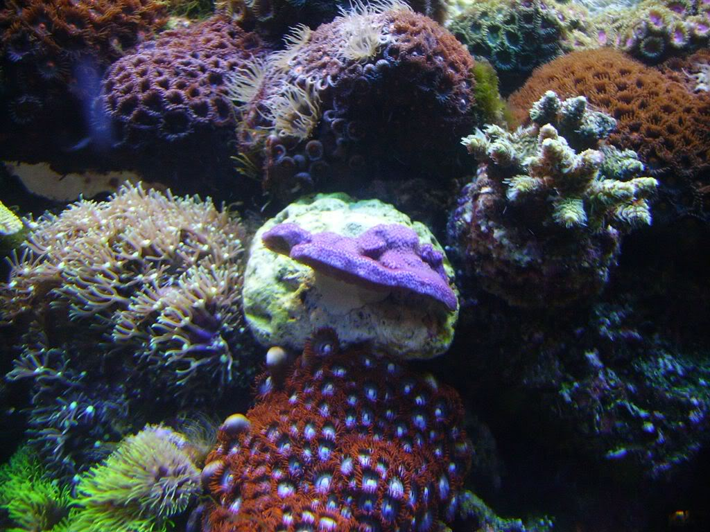 PurpleThingandZoas.jpg