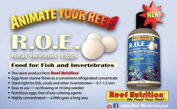 real-oyster-eggs-reef-nutrition.png