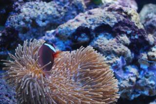 redanenomefish.jpg
