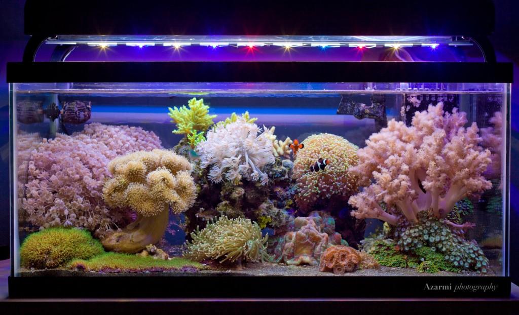 reef-2-29-12-1024x622.jpg