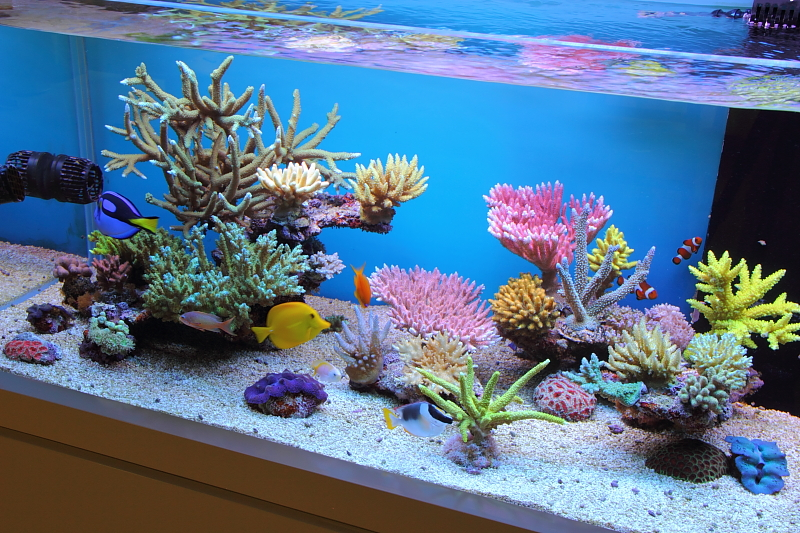 reef-in-the-sky-dtoq-2.jpg