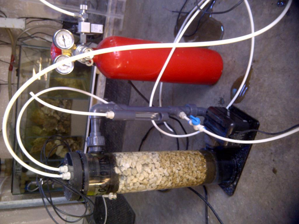 reef octopus with saga gas.jpg