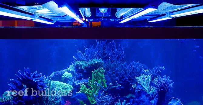 reefbrite-actinic-led-striplights-670-2.jpg
