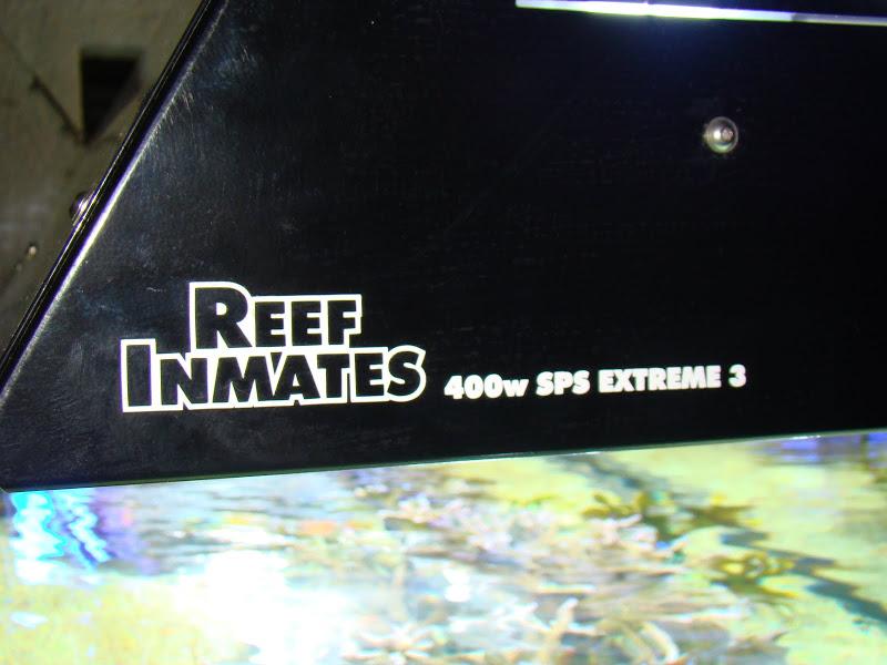 Reefinmates_sideview.JPG