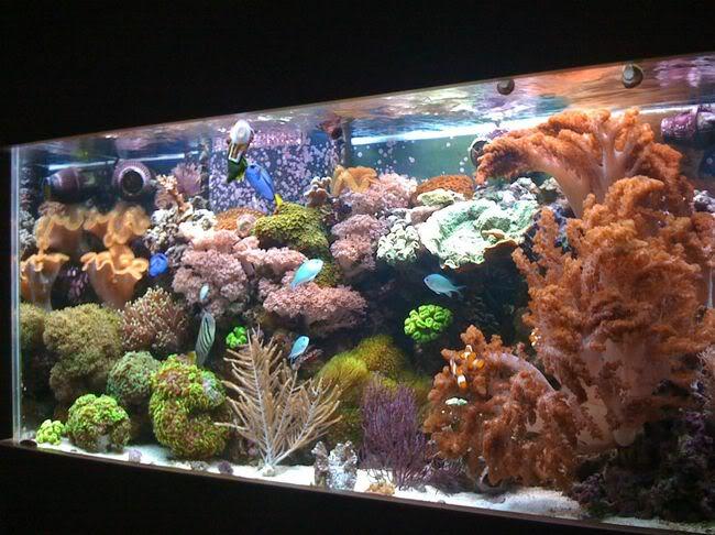 reeftank1-1.jpg