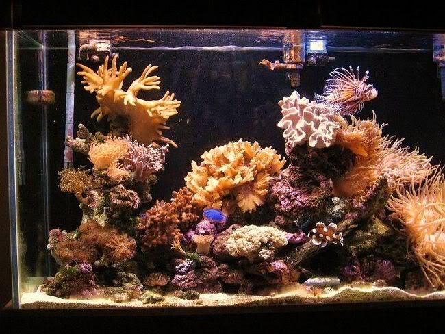 reeftank8-1.jpg