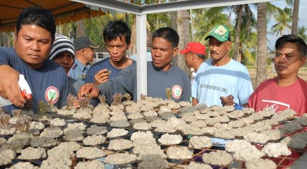 rvs-4star-coral-farm-2.jpg
